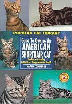 Guide to Owning an American Shorthair Cat