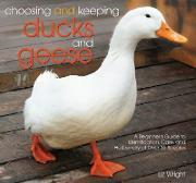 Choosing and Keeping Ducks and Geese