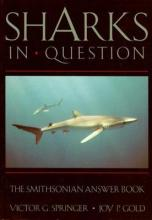 Sharks in Question