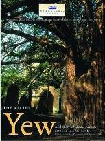 The Ancient Yew