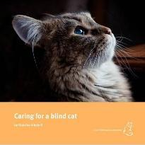 Caring for a Blind Cat