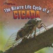 The Bizarre Life Cycle of a Cicada