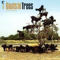 Goats in Trees 2014 Wall Calendar