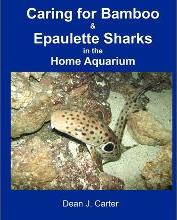 Caring for Bamboo and Epaulette Sharks in the Home Aquarium