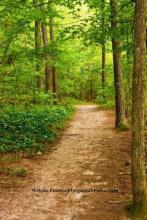 Website Password Organizer Forest Path