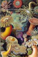 Ernst Haeckel Art Forms in Nature (Plates 26-50)