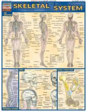 Skeletal System Laminate Reference Chart