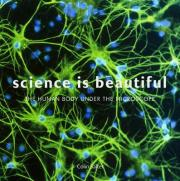 Science is Beautiful: The Human Body
