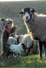 Yorkshire Shepherdess Notebook