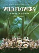 Wild Flowers of Yunnan in China